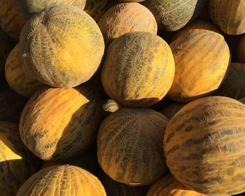 Mehrere Melonen sonnenbeschienen